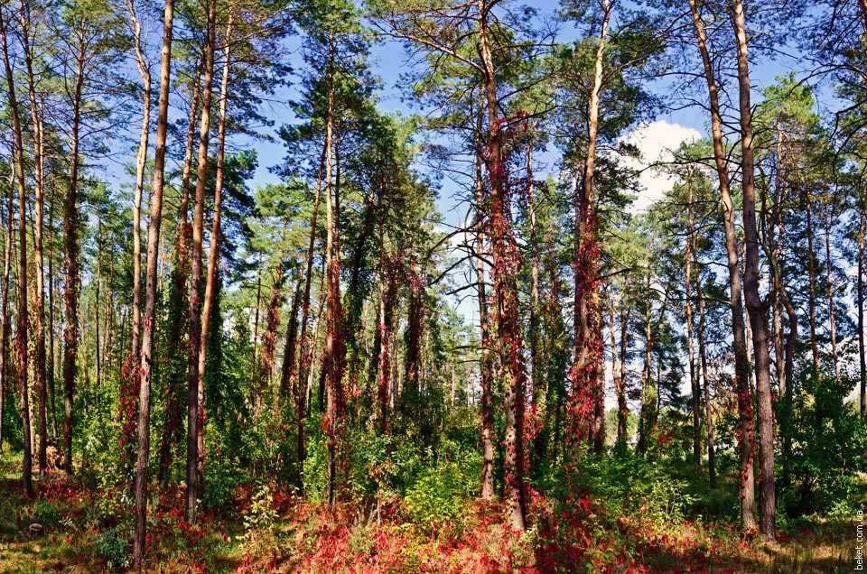 У лісі біля села